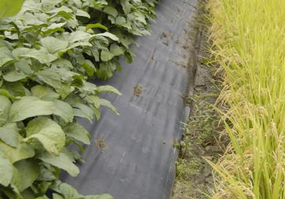 農地の防草シート施工事例 (田んぼの土手)(畦畔)