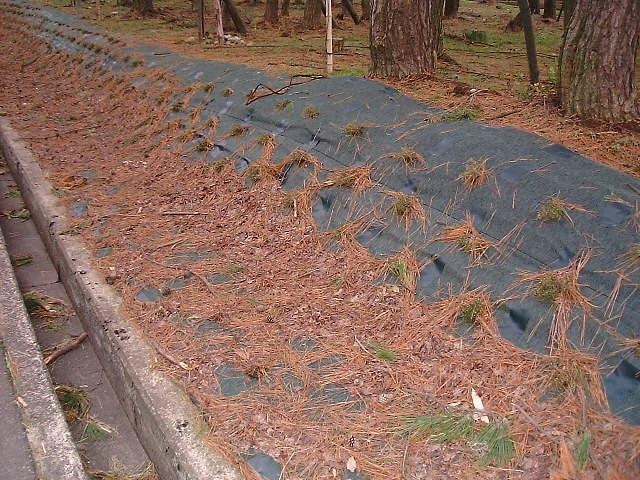 防草シートの上の堆積物