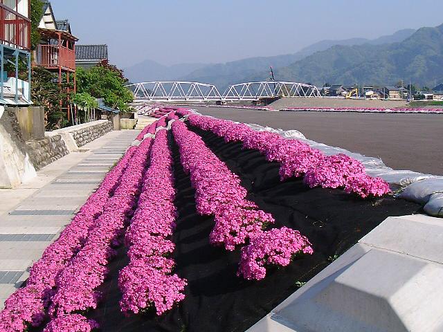 flower_photo_3