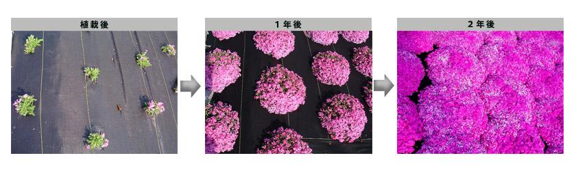 flower_photo_4