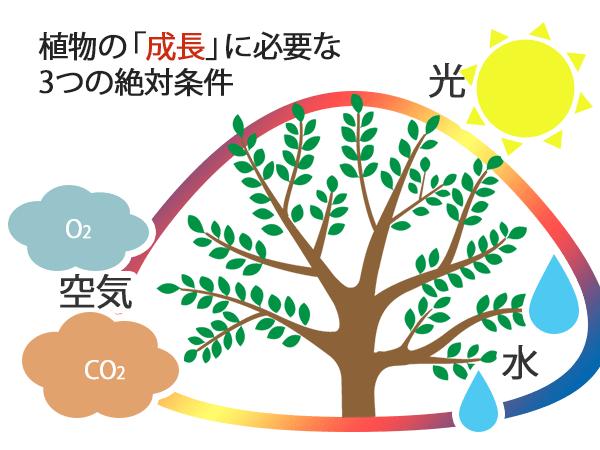 植物が成長する3つの条件