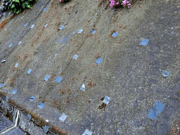 苔が生えた防草シート1