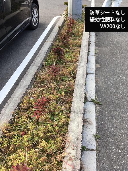 防草シート・肥料・VA200なしの植栽