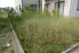 施工前 雑草繁茂の様子