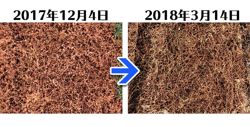 180314_ヒメツルソバ+グリーンフィルC比較