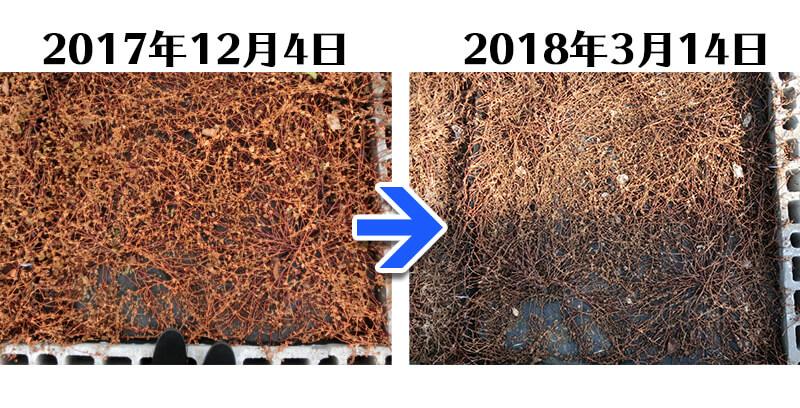 180314_ヒメツルソバ+らくらく草なしシート比較