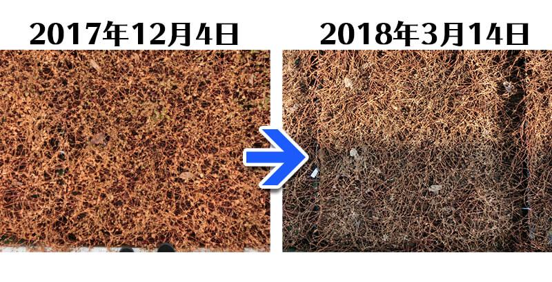 180314_ヒメツルソバ+土にかえる植栽専用草なしシート比較