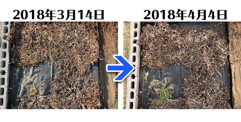 180404_ガザニア+らくらく草なしシート比較