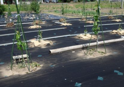 農地の防草シート施工事例(畑)