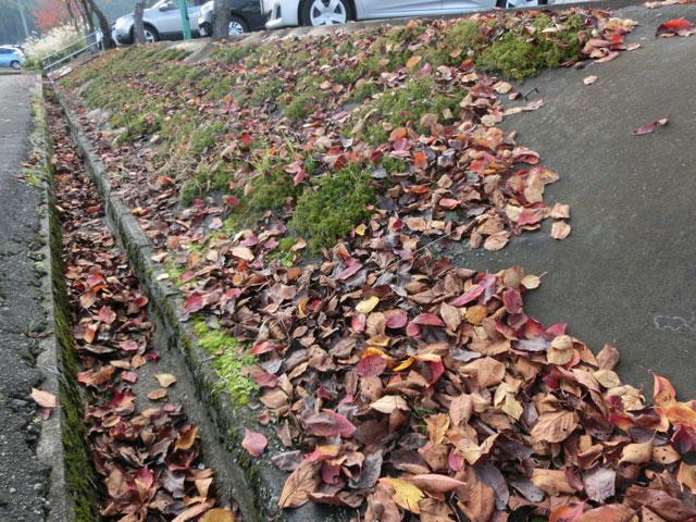 防草シートに落ち葉が溜まっている様子