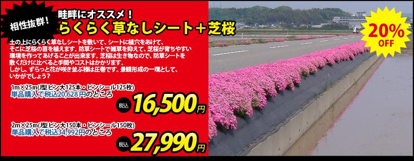 らくらく草なしシート+芝桜