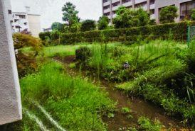 [村上議鎭 様]雑草対策事例⑥施工前