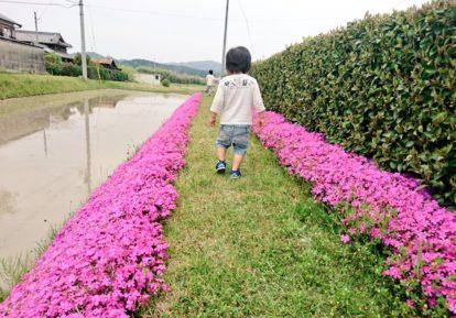 農地の防草シート施工事例(農道)[コンテスト応募作品]