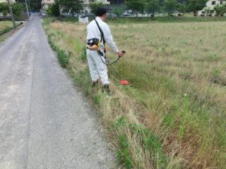 施工前の除草作業