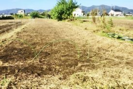 [出畑様]雑草対策事例③整地後