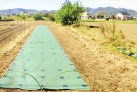 [出畑様]雑草対策事例④1回目施工