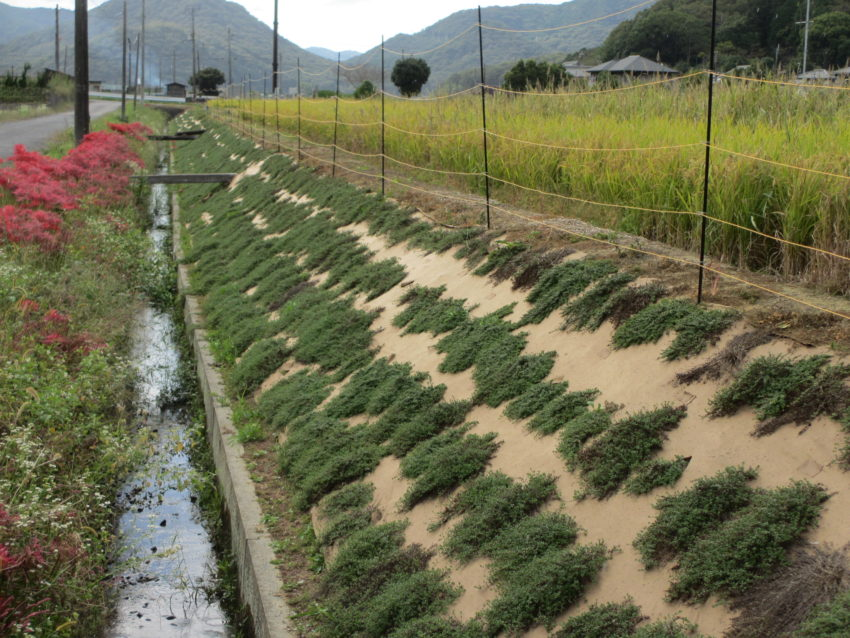 [牟礼活動組織様]雑草対策事例①