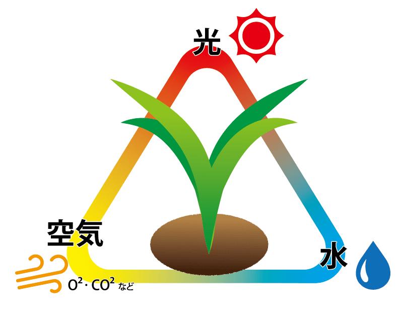 雑草が生える3要素とは?