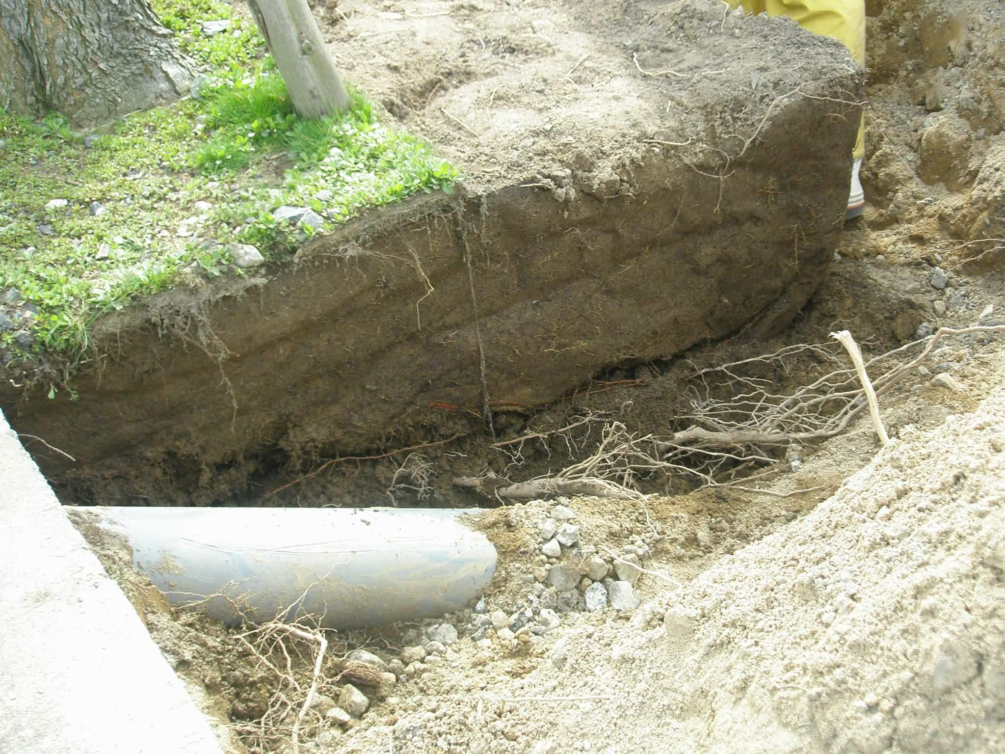 防根シートを撤去後の断面の様子